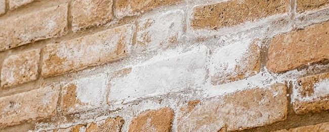 شوره در دیوار آجر